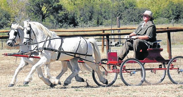 WELL DISCIPLINED: Elizabeth Ford competed alongside her two daughters, Sarah and Hannah, and her father, Jack Gilfillan, at the South African Welsh Pony Championships in recent weeks. Here Elizabeth shows driving in double harness stallions.